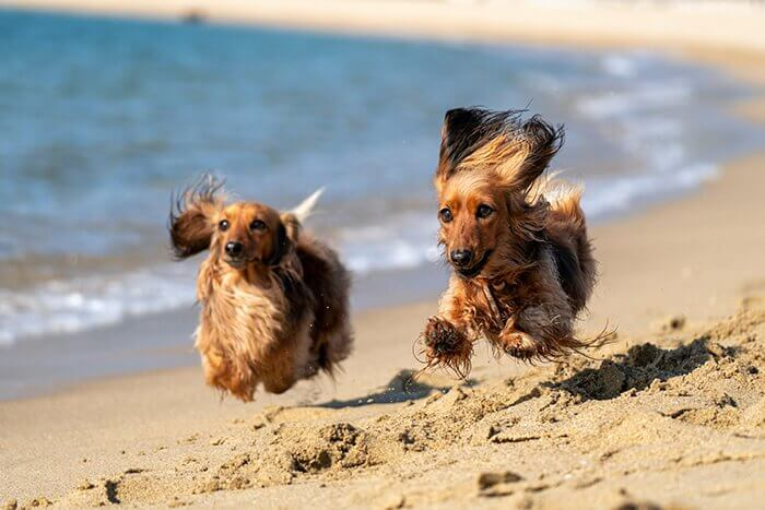 Happy dogs running along the beach