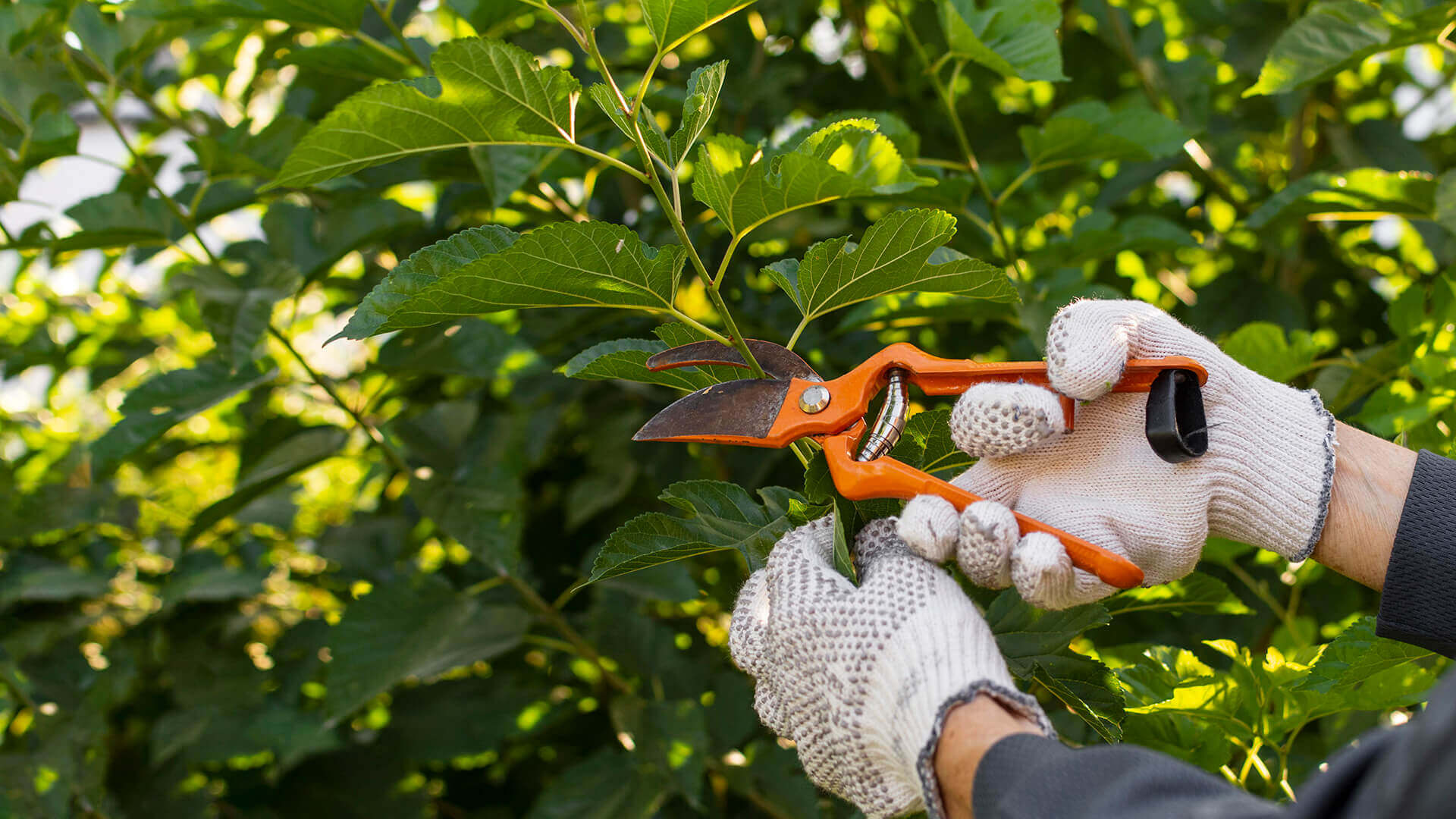 Gardening Assistant - Lady's Mile Careers