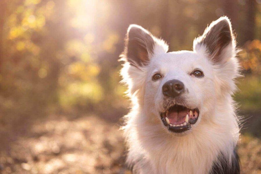 portrait-beautiful-dog.jpg